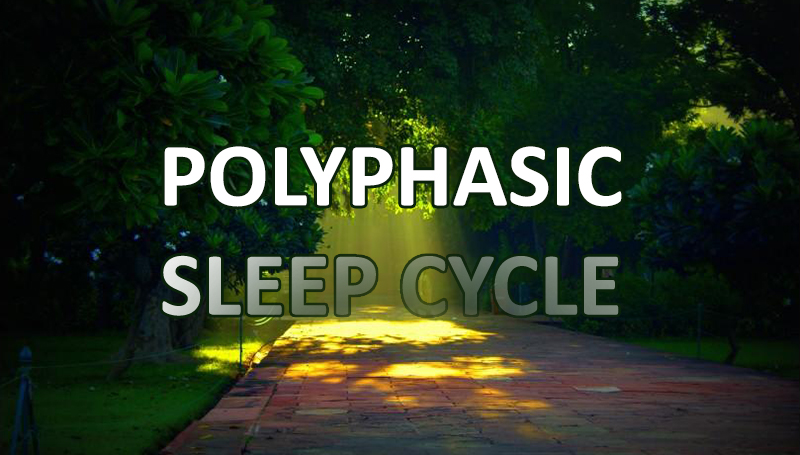 polyphasic-sleep-cycle-morning