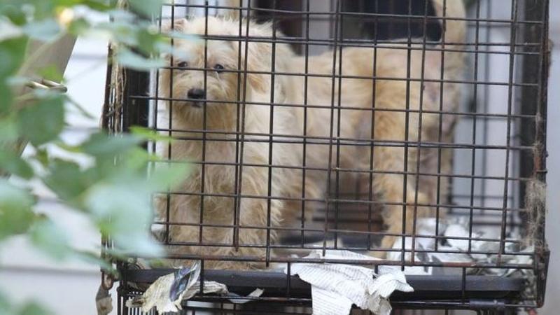 puppy-mills-caged